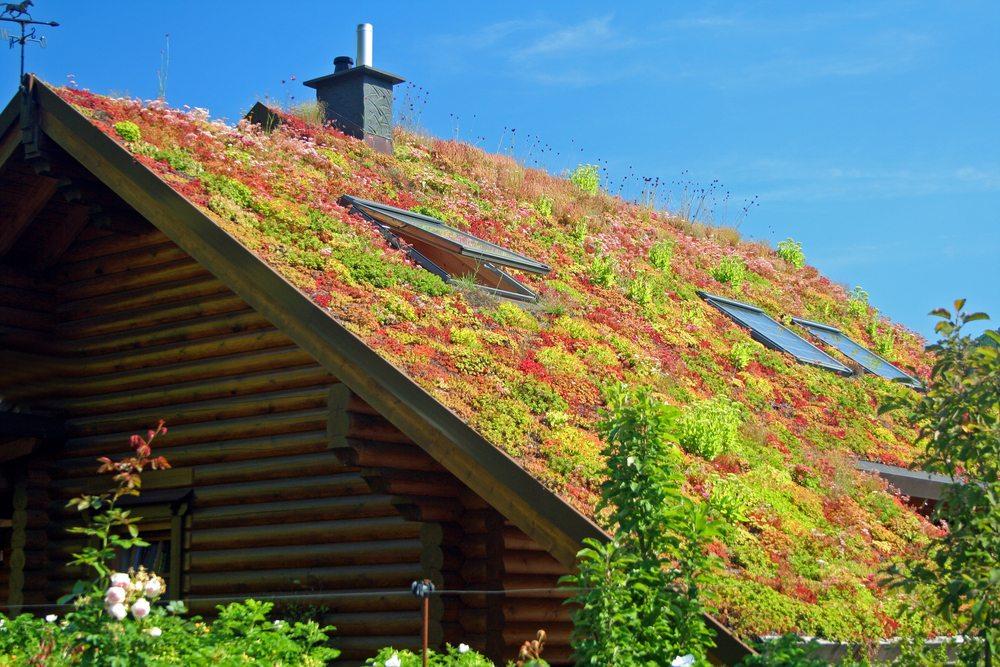Dachbegrünung in Bad Neuenahr